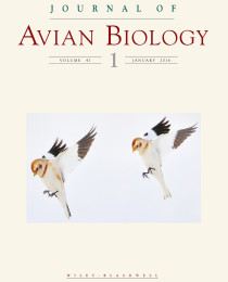Emily and Christie land the cover of the Journal of Avian Biology!!
